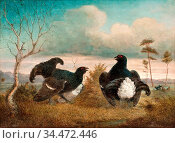 Reinberg Johan Jakob - Mating - Finnish School - 19th Century. Редакционное фото, фотограф Artepics / age Fotostock / Фотобанк Лори