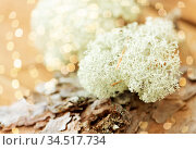 close up of reindeer lichen moss on pine tree bark. Стоковое фото, фотограф Syda Productions / Фотобанк Лори
