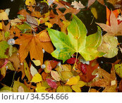 Herbstlaub, See, wasser, laub, blätter, natur, gewässer, bunt, braun... Стоковое фото, фотограф Zoonar.com/Volker Rauch / age Fotostock / Фотобанк Лори