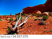 Beautiful view in Arches canyon in sunny day. USA. Стоковое фото, фотограф Zoonar.com/Dmitry Kushch / age Fotostock / Фотобанк Лори
