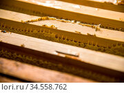 Frames in which is stored Unfinished fresh honey in honeycombs. Close... Стоковое фото, фотограф Zoonar.com/Ian Iankovskii / easy Fotostock / Фотобанк Лори
