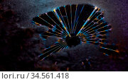 Bunte Lichter an Riesenrad als Reflexion im Wasser einer Pfütze auf... Стоковое фото, фотограф Zoonar.com/Robert Kneschke / age Fotostock / Фотобанк Лори