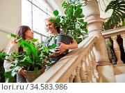 Floristen Team liefert grüne Pflanzen als Catering Service für Hochzeit. Стоковое фото, фотограф Zoonar.com/Robert Kneschke / age Fotostock / Фотобанк Лори