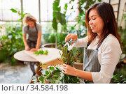 Asiatische Floristin mit Schere beim Blumenstrauß binden im Blumenladen. Стоковое фото, фотограф Zoonar.com/Robert Kneschke / age Fotostock / Фотобанк Лори