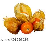 Orange physalis fruit. Стоковое фото, фотограф Яков Филимонов / Фотобанк Лори