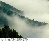 Wald, bäume, nebelfetzen, nebel, wolke, wolken, talnebel, italien... Стоковое фото, фотограф Zoonar.com/Volker Rauch / easy Fotostock / Фотобанк Лори