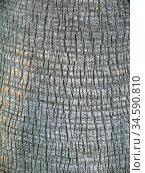 Rinde, Palme, palmenrinde, struktur, muster, braun, natur, oberfläche... Стоковое фото, фотограф Zoonar.com/Volker Rauch / easy Fotostock / Фотобанк Лори