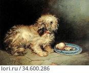 Armfield George - Terrier - British School - 19th Century. Стоковое фото, фотограф Artepics / age Fotostock / Фотобанк Лори