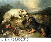 Armfield George - Terriers Rabbiting - British School - 19th Century. Стоковое фото, фотограф Artepics / age Fotostock / Фотобанк Лори