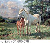Barker Wright - Mare and Foal - British School - 19th Century. Стоковое фото, фотограф Artepics / age Fotostock / Фотобанк Лори