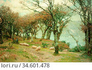 Birch Samuel John Lamorna - Fallen Acorns - British School - 19th... Стоковое фото, фотограф Artepics / age Fotostock / Фотобанк Лори