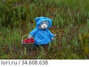 Игрушки. Кот в плаще с ведром клюквы. Стоковое фото, фотограф Dmitry29 / Фотобанк Лори