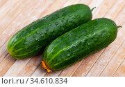 Ripe juicy cucumbers on wooden table closeup. Стоковое фото, фотограф Яков Филимонов / Фотобанк Лори