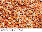 The bag full of dry corn texture. Стоковое фото, фотограф Zoonar.com/Ruslan Ropat / age Fotostock / Фотобанк Лори