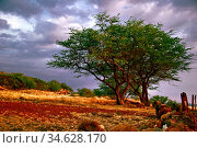 Landscape of Big Island. Hawaii. USA. Стоковое фото, фотограф Zoonar.com/Dmitry Kushch / age Fotostock / Фотобанк Лори