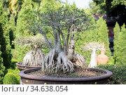 A Bonsay garden at the nong nooch tropical garden near the city of... Стоковое фото, фотограф Zoonar.com/URS FLUEELER / age Fotostock / Фотобанк Лори