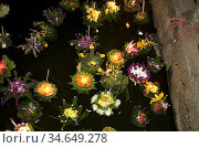 Krathong illuminated raft or floats Jong Kham Lake Mae Hong Son Thailand. Стоковое фото, фотограф Andrew Woodley / age Fotostock / Фотобанк Лори