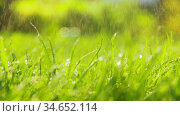green grass or lawn watered outdoors. Стоковое видео, видеограф Syda Productions / Фотобанк Лори