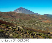 Mount Teide Spanish: El Teide, Pico del Teide,volcano on Tenerife in the Canary Islands, Spain. Стоковое фото, фотограф Ernie Janes / Nature Picture Library / Фотобанк Лори