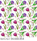 Floral seamless pattern with pink, purple and white tulips on white... Стоковое фото, фотограф Zoonar.com/Rvo233 / easy Fotostock / Фотобанк Лори