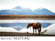 Horse by the lake on the background of volcanoes. Редакционное фото, фотограф Вита Фортуна / Фотобанк Лори