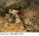 Swan Cuthbert Edmund - Leopard Cubs - British School - 19th Century. Стоковое фото, фотограф Artepics / age Fotostock / Фотобанк Лори