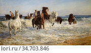 Kemp-Welch Lucy Elizabeth - Horses Bathing in the Sea - British School... Редакционное фото, фотограф Artepics / age Fotostock / Фотобанк Лори