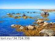 Камни и водоросли в синей воде Белого моря на Соловках. Стоковое фото, фотограф Baturina Yuliya / Фотобанк Лори