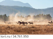 Horse herd run on pasture in Chile, South America. Стоковое фото, фотограф Zoonar.com/Galyna Andrushko / easy Fotostock / Фотобанк Лори