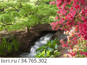Small waterfall in a garden setting in the springs. Стоковое фото, фотограф Joseph De Sciose / age Fotostock / Фотобанк Лори