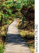 Wanderweg an der Küste mit Herbststimmung und Sonnenschein im Naturschutzgebiet... Стоковое фото, фотограф Zoonar.com/Christine Nöh / easy Fotostock / Фотобанк Лори