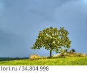 Solitary tree and old farm implement near Montastruc, Lot-et-Garonne... Стоковое фото, фотограф Ian Cook / age Fotostock / Фотобанк Лори