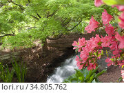 Small waterfall in a garden setting in the springs with a Japanese... Стоковое фото, фотограф Joseph De Sciose / age Fotostock / Фотобанк Лори