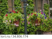 Flower baskets on a lamp post in Occidental Park in Seattle in Washington... Стоковое фото, фотограф Wolfgang Kaehler / age Fotostock / Фотобанк Лори