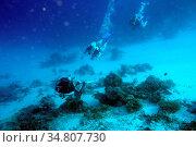 Taucher am Korallenriff auf den Malediven. Стоковое фото, фотограф Zoonar.com/manfred2000 / easy Fotostock / Фотобанк Лори