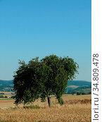 Baum, feld, getreide, getreidefeld, landschaft, landwirtschaft, natur... Стоковое фото, фотограф Zoonar.com/Volker Rauch / easy Fotostock / Фотобанк Лори