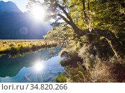 Sunburst Reflection in Mirror Lakes, Fiordland on the drive from ... Стоковое фото, фотограф Matthew Williams-Ellis / age Fotostock / Фотобанк Лори