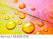 Macro photography of bright autumn leaf with water droplets. Shallow... Стоковое фото, фотограф Zoonar.com/Alex Veresovich / easy Fotostock / Фотобанк Лори
