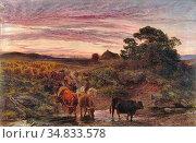 Moore Henry - Cattle Fording a Stream - British School - 19th Century. Редакционное фото, фотограф Artepics / age Fotostock / Фотобанк Лори