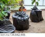 Саженцы плодовых деревьев упакованные в пленку для перевозки. Стоковое фото, фотограф Вячеслав Палес / Фотобанк Лори