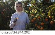 Portrait of cheerful female worker picking mandarins in basket on farm. Стоковое видео, видеограф Яков Филимонов / Фотобанк Лори