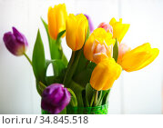 spring fresh bouquet of colorful beautiful tulips. Стоковое фото, фотограф Анна Гучек / Фотобанк Лори