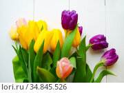 bouquet of colorful beautiful tulips - concept of March 8, Mother's Day. Стоковое фото, фотограф Анна Гучек / Фотобанк Лори