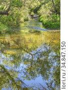 Small creek at Los Penasquitos Canyon Preserve, San DIego, California. Стоковое фото, фотограф Julia Hiebaum / age Fotostock / Фотобанк Лори