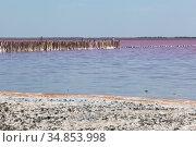 Деревянный частокол на розовом озере Сасык-Сиваш у города Евпатории, Крым. Стоковое фото, фотограф Николай Мухорин / Фотобанк Лори