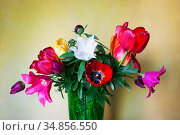 Bouquet of colorful tulips and peonies in a vase on a yellow background. Стоковое фото, фотограф Анна Гучек / Фотобанк Лори
