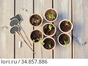 seedlings in pots with soil on wooden background. Стоковое фото, фотограф Syda Productions / Фотобанк Лори