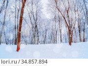 Зимний пейзаж. Зимний лес. Winter landscape with falling snow. Wonderland forest with snowfall over winter grove. Стоковое фото, фотограф Зезелина Марина / Фотобанк Лори