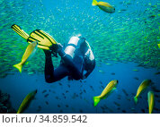 A diver moving into a large flock of fish in the Indian Ocean. Стоковое фото, фотограф Сергей Фролов / Фотобанк Лори