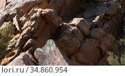 Lion sitting on a rock 4k. Стоковое видео, агентство Wavebreak Media / Фотобанк Лори